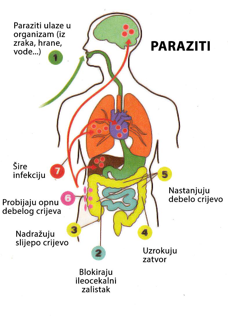 simptomele celulelor de ou de vierme cancer de ano por hpv