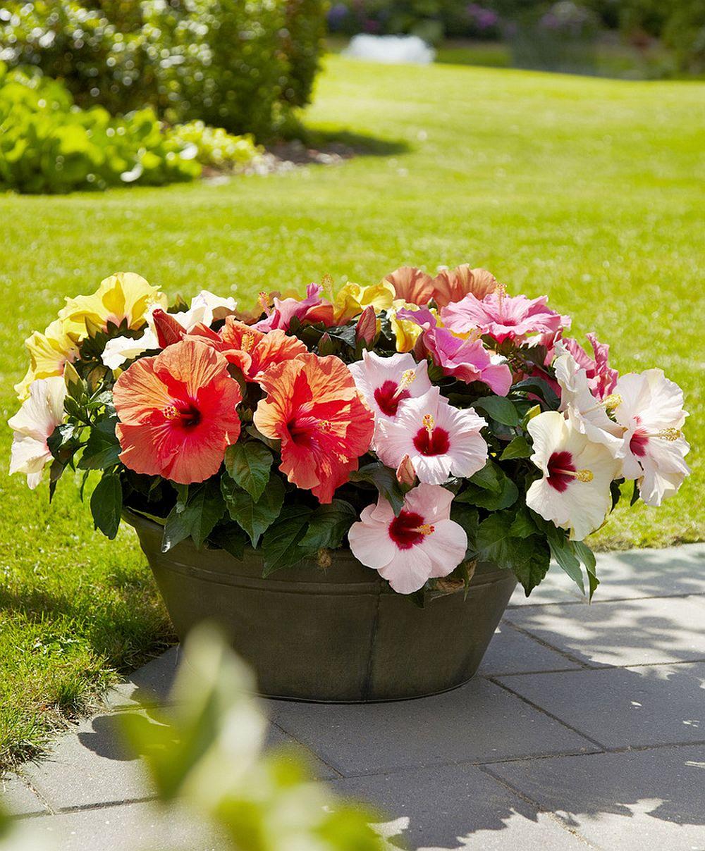 produse parazitare pentru trandafiri