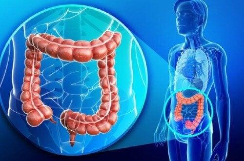 Boala incepe in stomac iar moartea in colon   Harmony Clinic