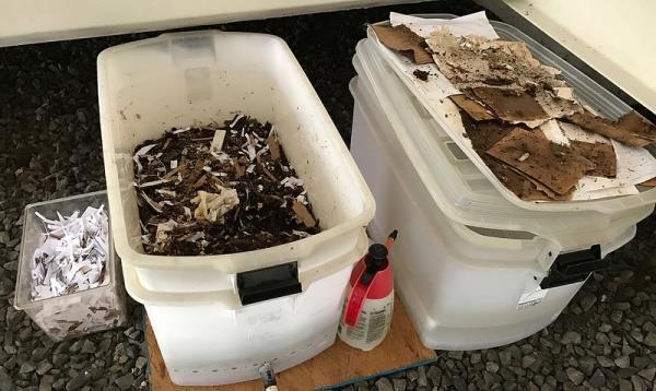 pregătire pentru toate tipurile de viermi