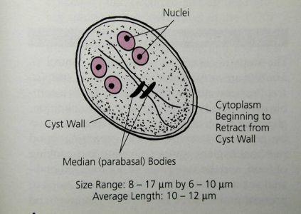 hpv warts when pregnant cancerul de piele simptome