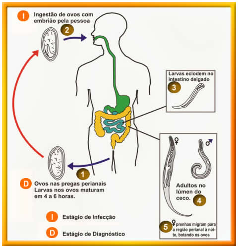 enterobiose ou oxiurose prevencao