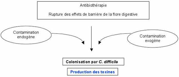 Colita cu Clostridium difficile (Colita pseudomembranoasa)