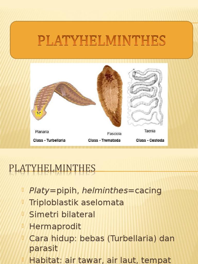 reproducerea plathelminthes)