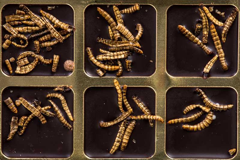 semne de viermi în corpul uman