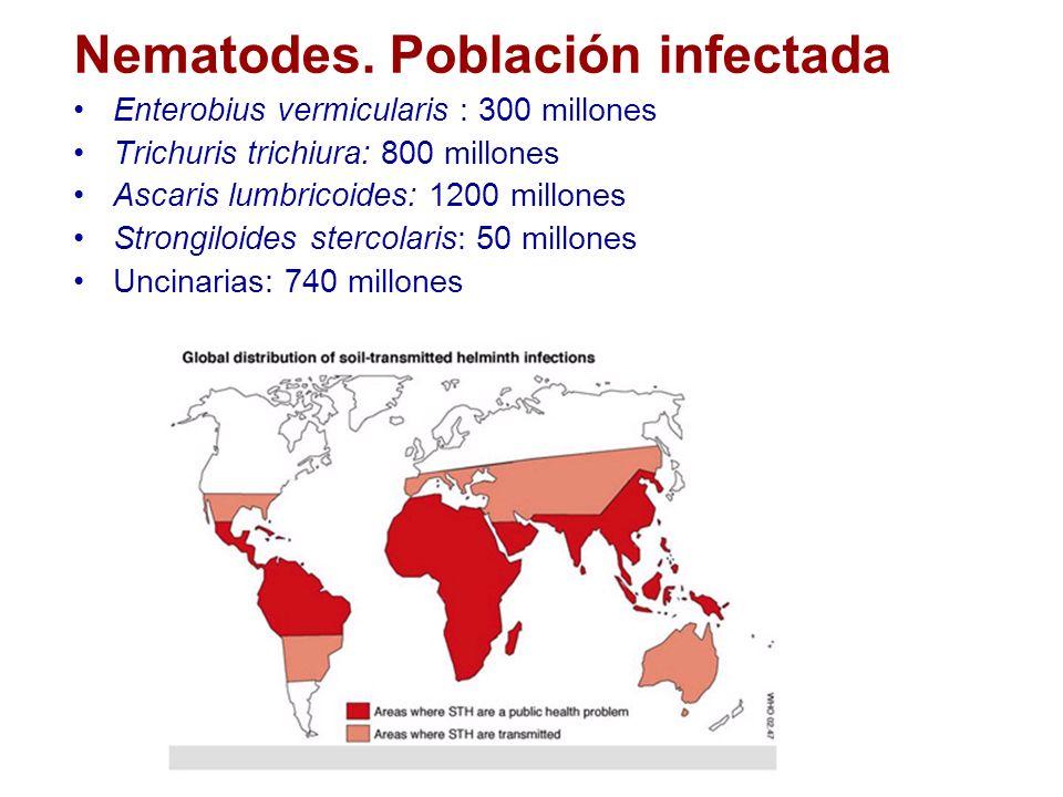 Enterobius vermicularis epidemiologia