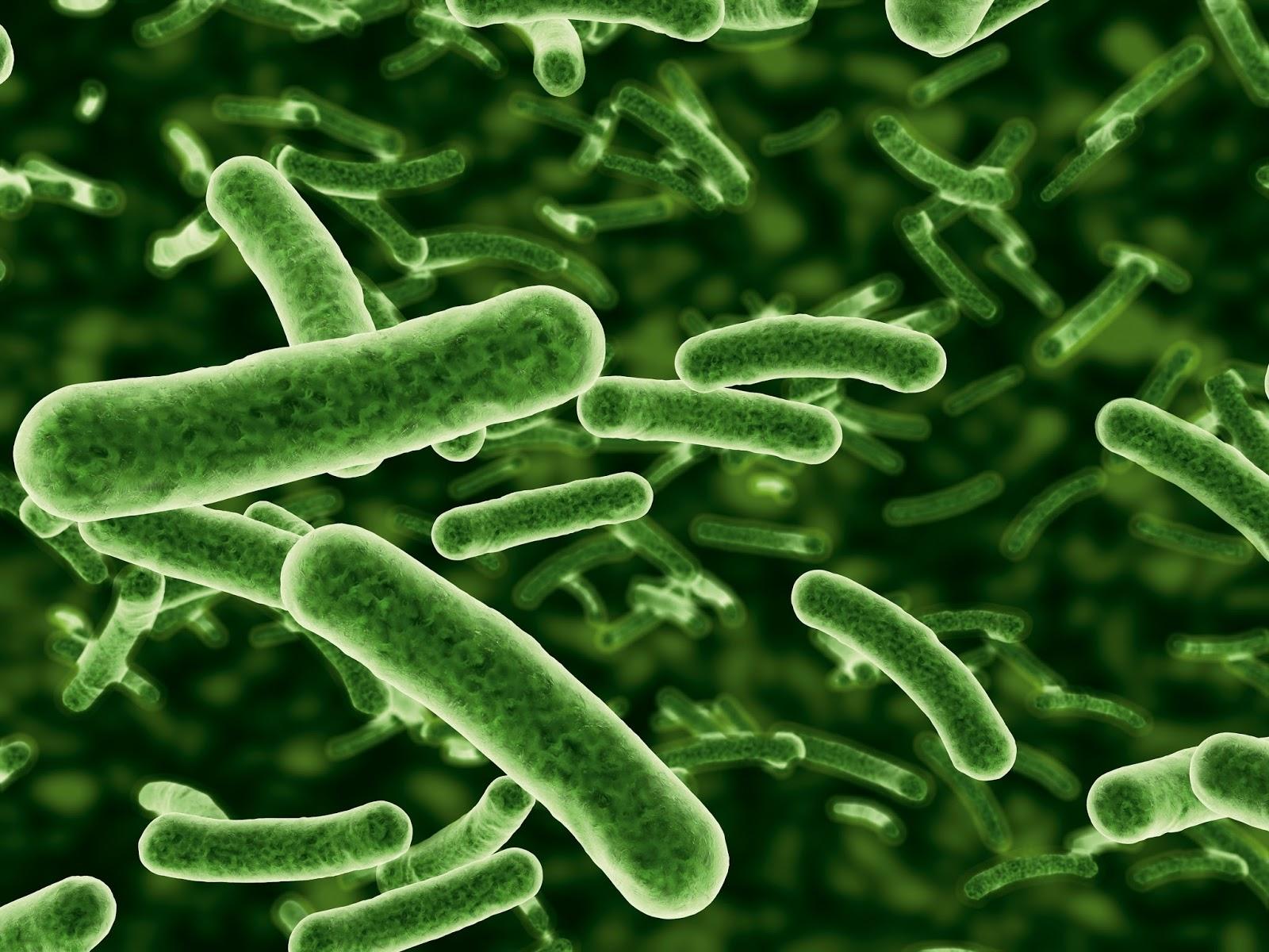 Exemple de bacterii parazite - Boli Produse de Bacterii