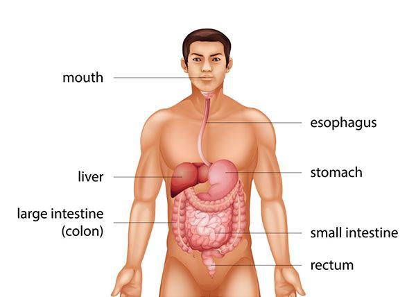 cancer colon que es hpv genital warts lead to cancer