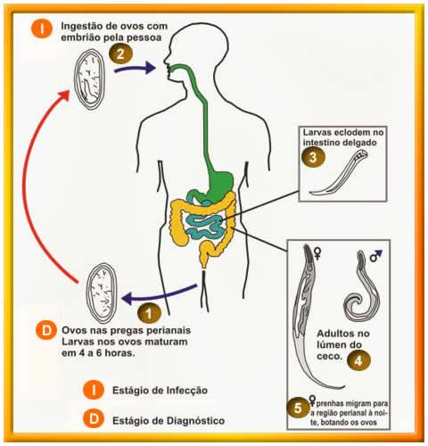 Oxiurose prevencao - Paraziti u organizmu