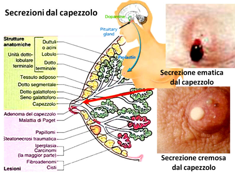recomandări clinice de hookworm)