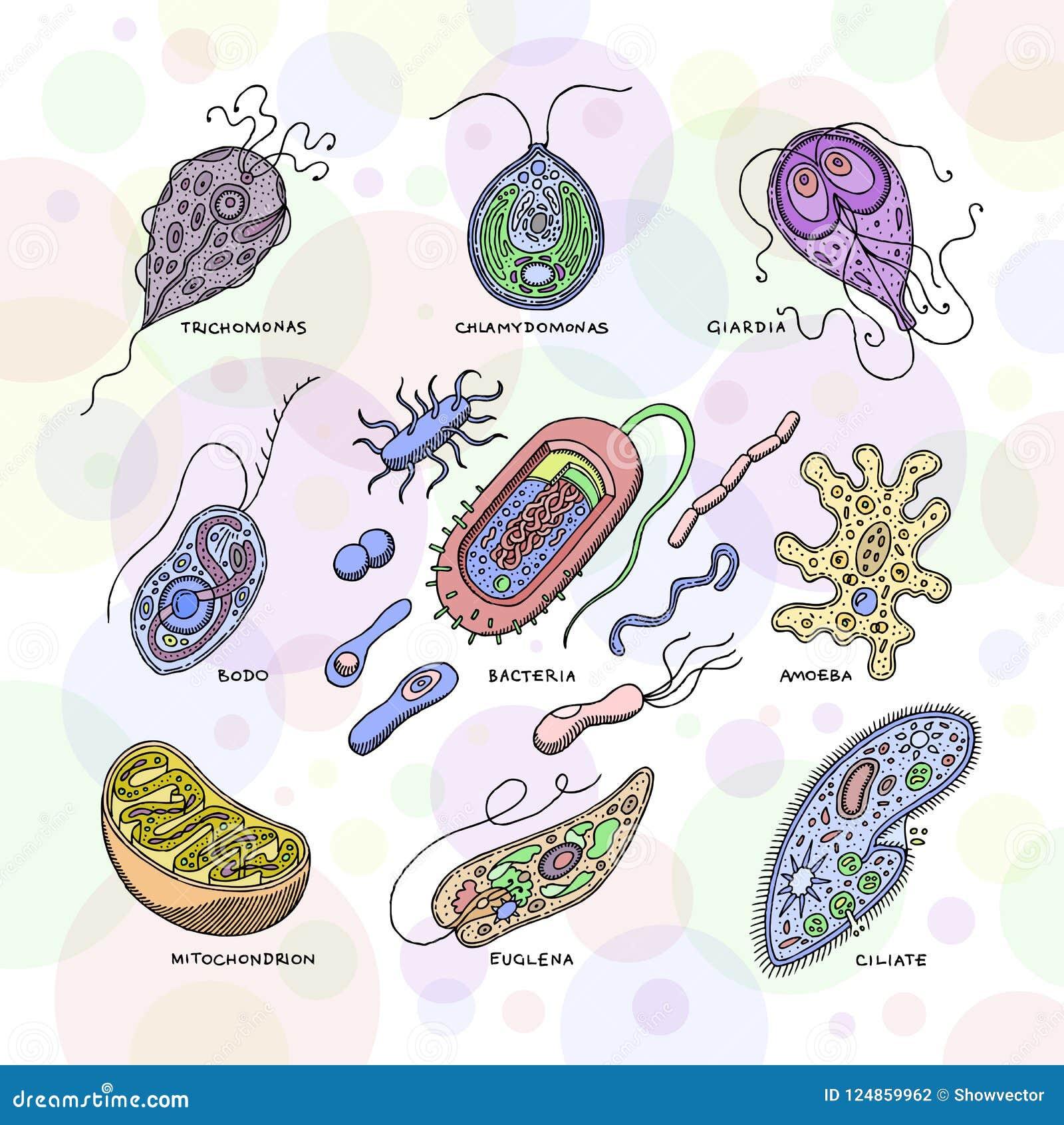 simptome protozoare de giardia papilloma del gatto