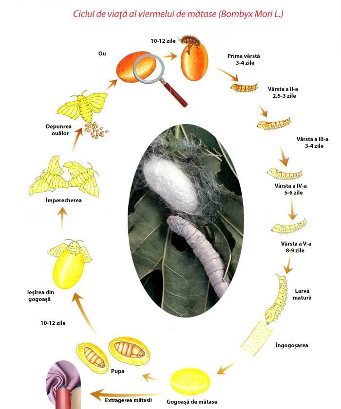 cum se numește viermele?