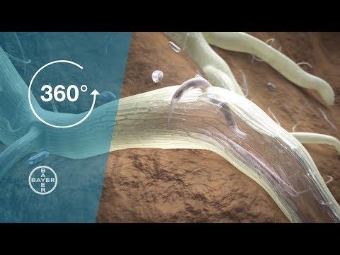 unguent în tratamentul verucilor genitale papilloma virus uomo verruche