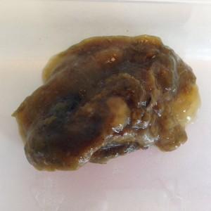 Giardia parasiet bij honden - Simptomă giardia kat