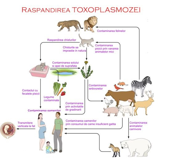 analize toxoplasmoza