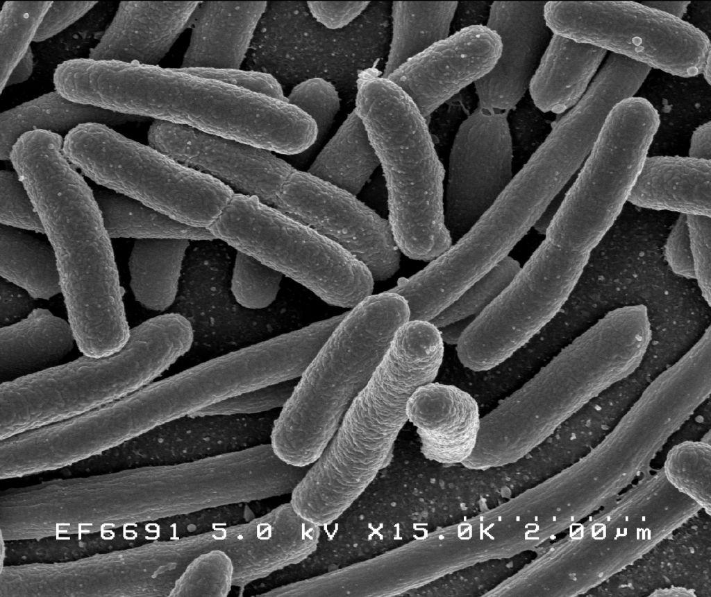 microorganismele sunt paraziți tratament viermi copii 3 ani