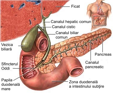 simptomele vezicii biliare inverted papilloma malignant transformation