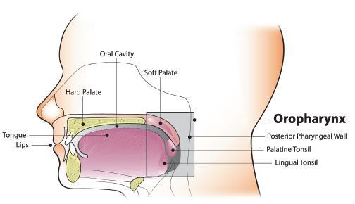 human papillomavirus gland