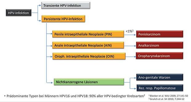 Hpv impfung manner nach infektion WIE AUCH IMMER. Oricum o faci. Clamidioza - PDF Free Download