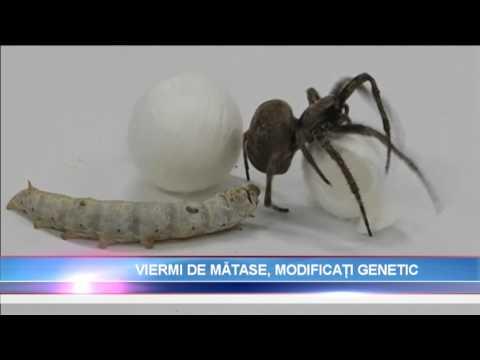 Medicamentul cu vierme helmifag. Analiza medicamentului parazit helmifag