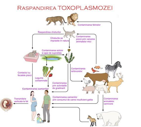 vaccin toxoplasmoza)