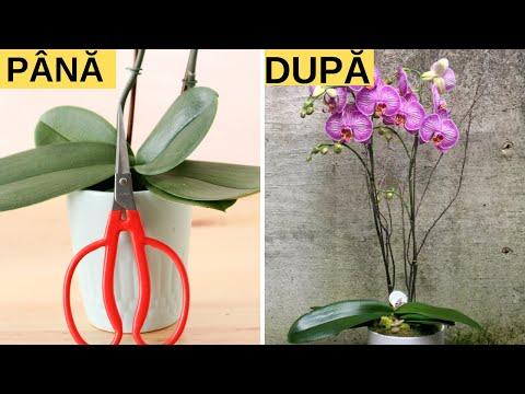aranjator de flori parazite