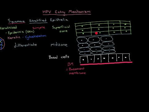 epidemiologia helmintiazei