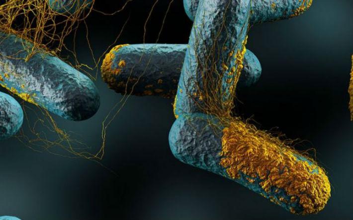 bacterii in apa)
