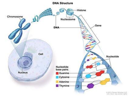 Cancer genetic link Prostate cancer genetic link - triplus.ro