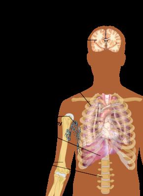 cancer origine hormonal