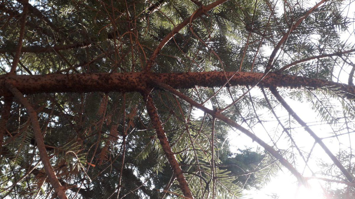 Cum pentru a scăpa de păduchi? Produse de tratare naturale şeful păduchi