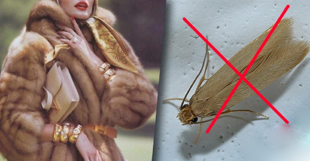 cum arată larvele de raze?)