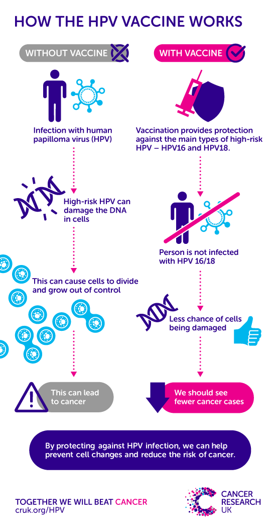 does hpv vaccine prevent cancer in males)