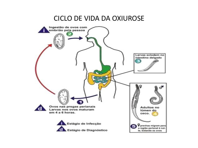 O que e bom para verme oxiurus - triplus.ro Qual o melhor tratamento para oxiurus