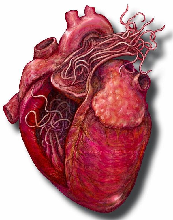 paraziți în tratamentul inimii