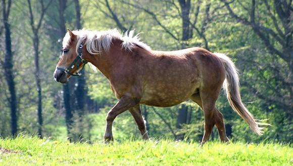 limbrici la cai