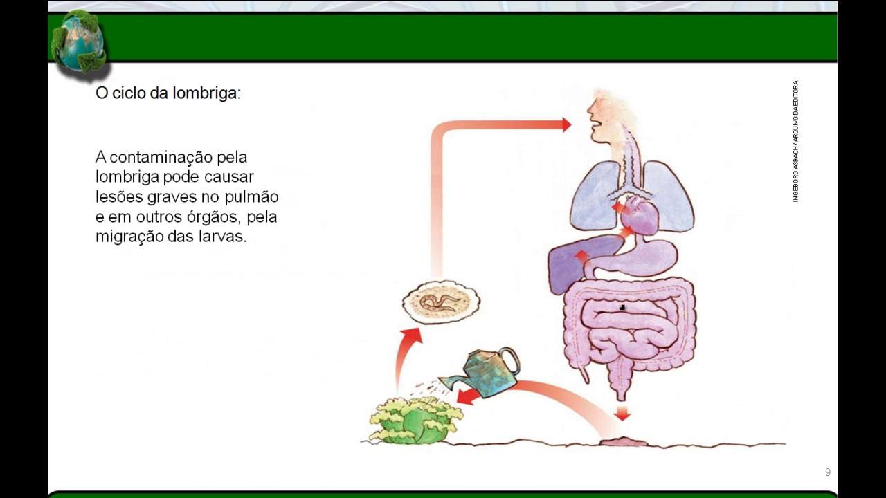 filo nemathelminthes resumo giardia în tratarea apei