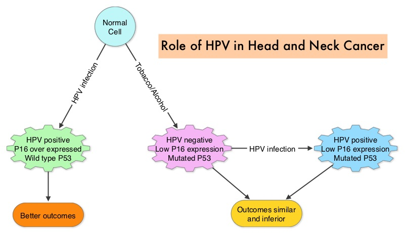 Hpv cancer p16, Hpv p16 virus