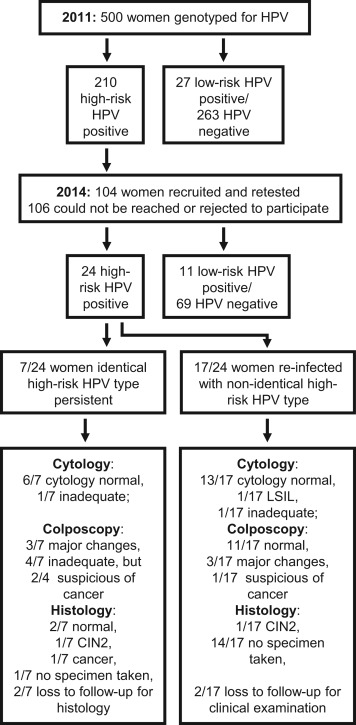 hpv high risk what does it mean