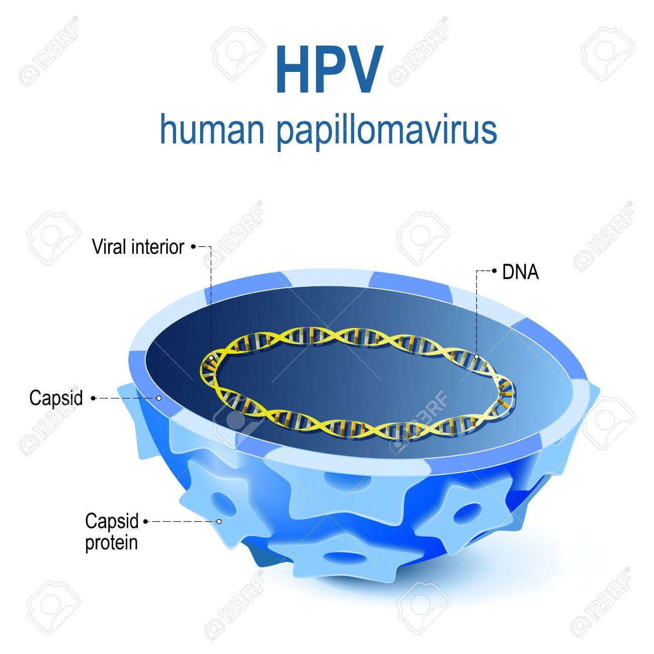 hpv virus dna or rna diagnosticul și tratamentul parazitului corpului uman