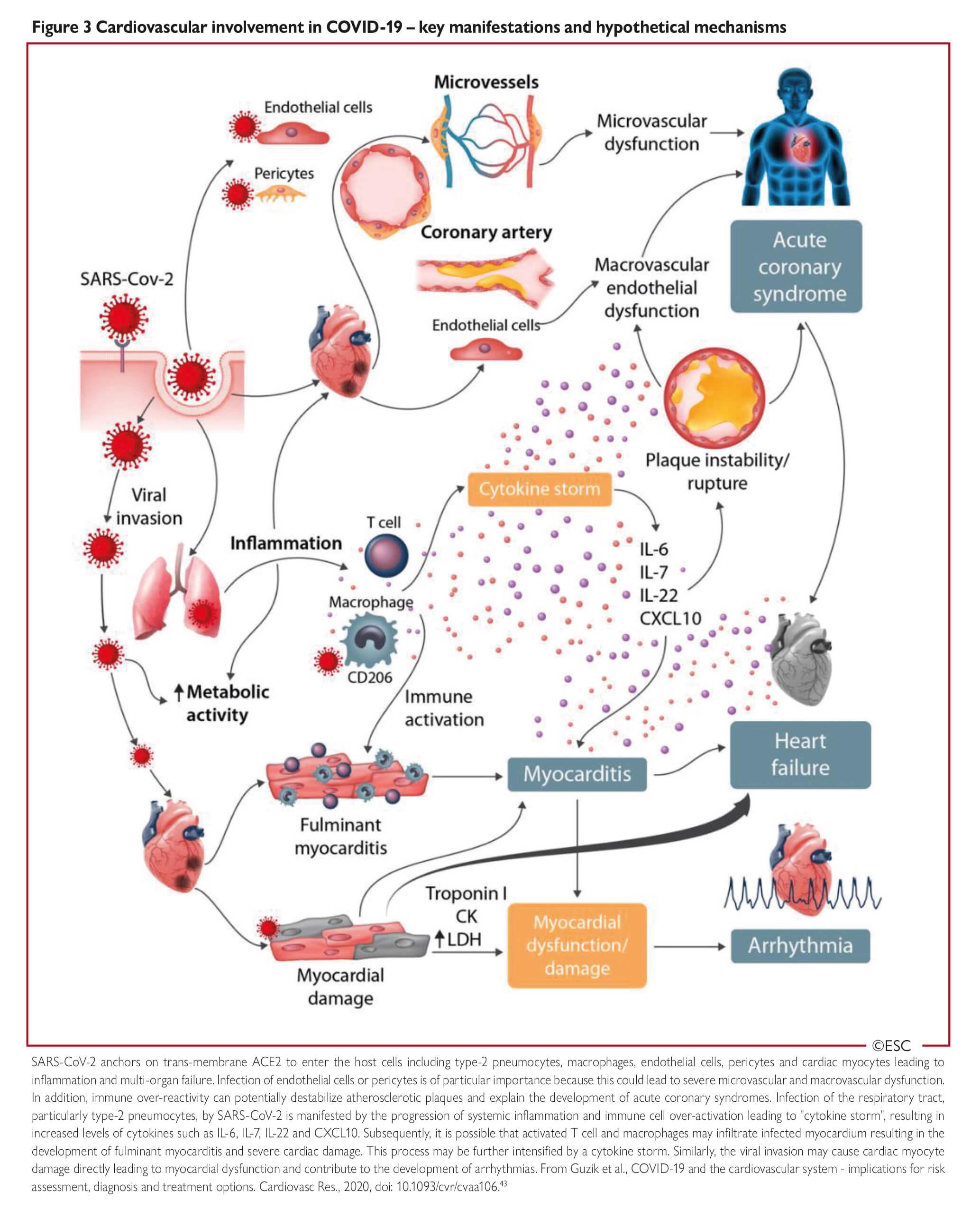 medicamente pentru enterobioză ian during)