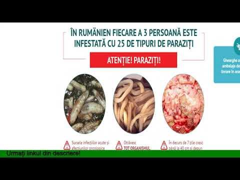 vierme de la persoană la persoană)