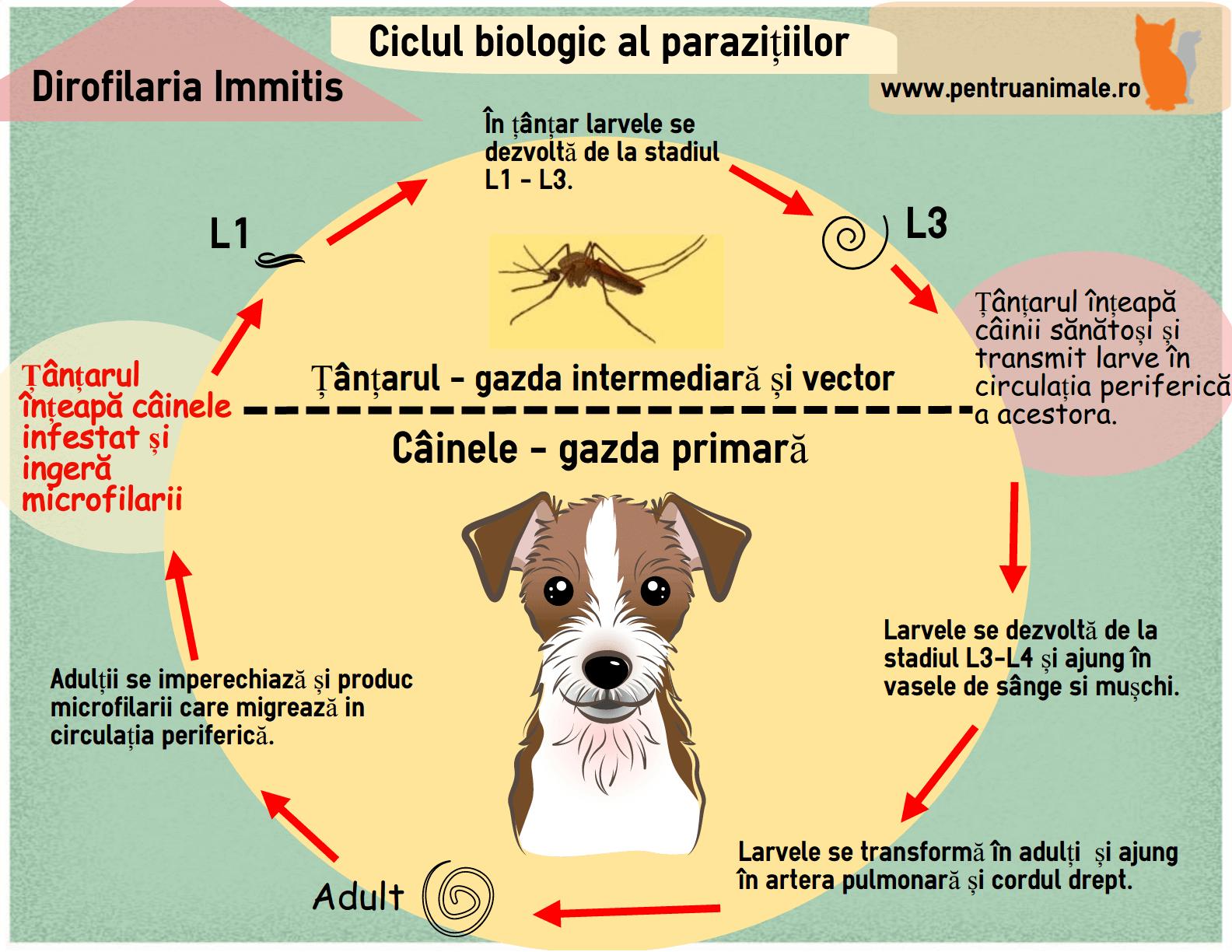 papilloma virus vaccino richiami