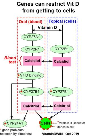 ovarian cancer vitamin d
