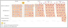 papillomavirus humains genitaux potentiellement oncogenes