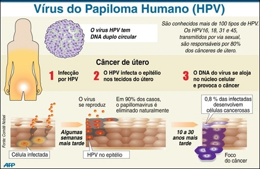papillomavirus o que e)