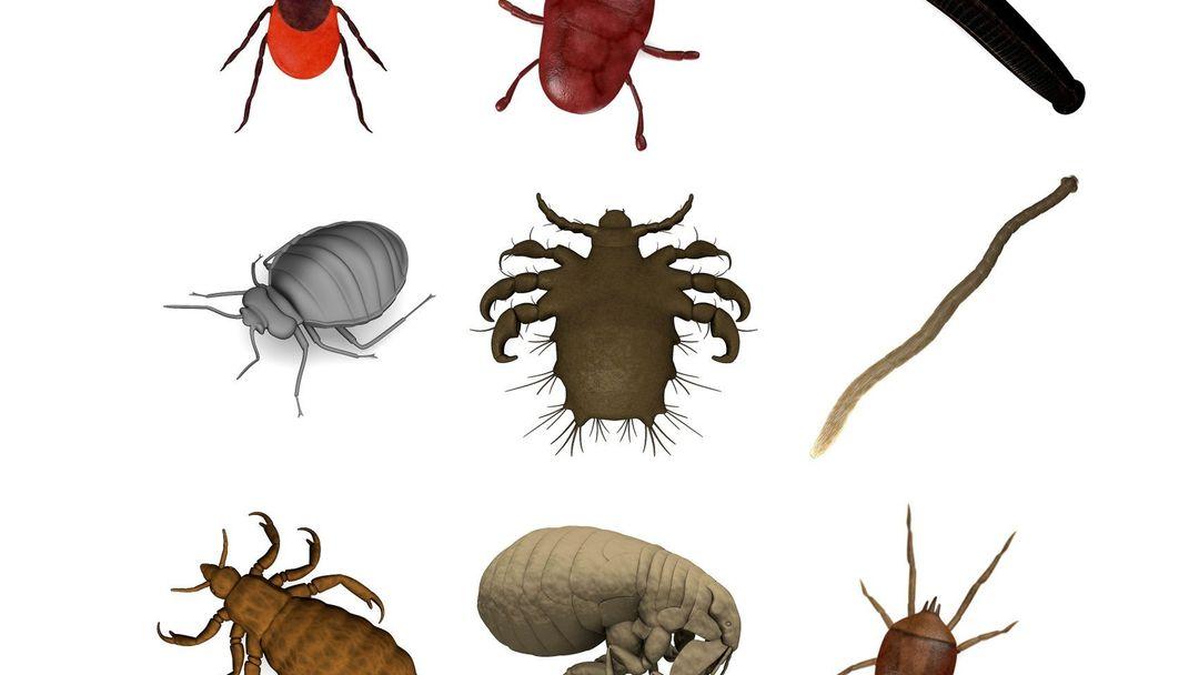 Paraziti ve strevech priznaky. Paraziti ve strevech lecba Eozinofilie - Zdravíadakindergarten.ro