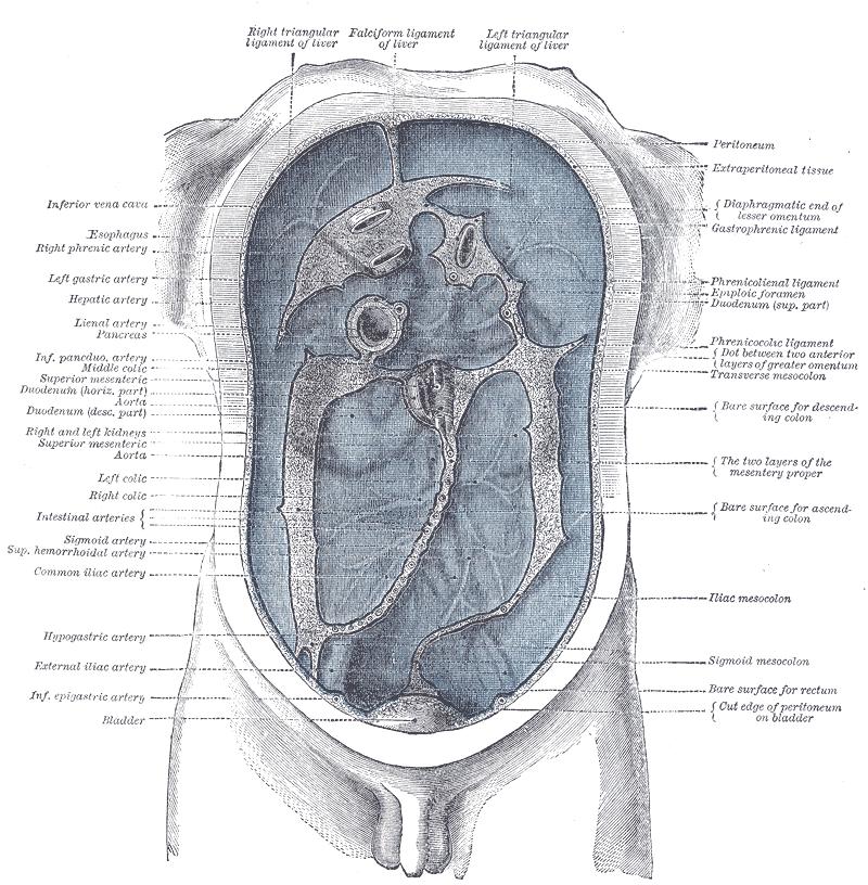 parazitoza cerebrala