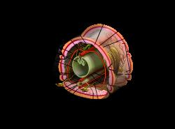 platyhelminthes coelomate de pseudocoelomate acoelomate