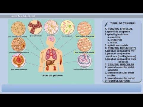 Parazitozele intestinale, Pasaj parazitar